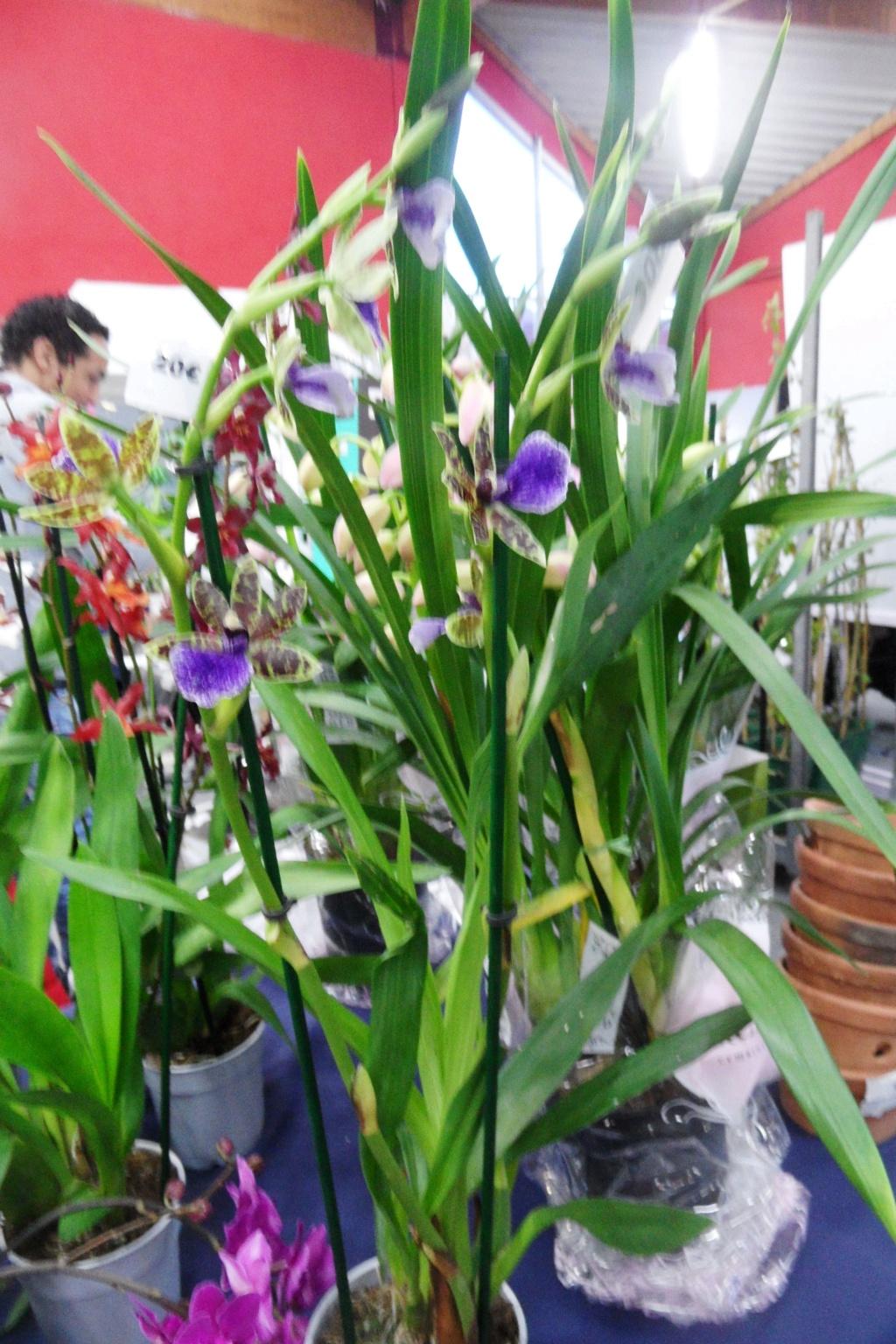 Salon orchidées Bouc-Bel-Air - Page 2 02610