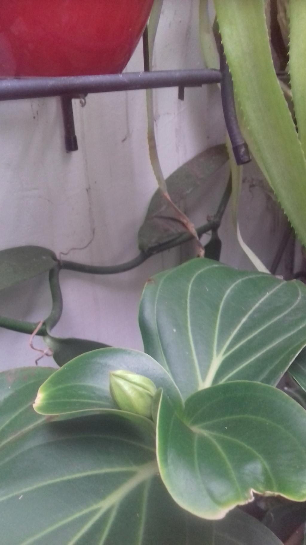 Mes plantes dans la véranda - Page 10 02615