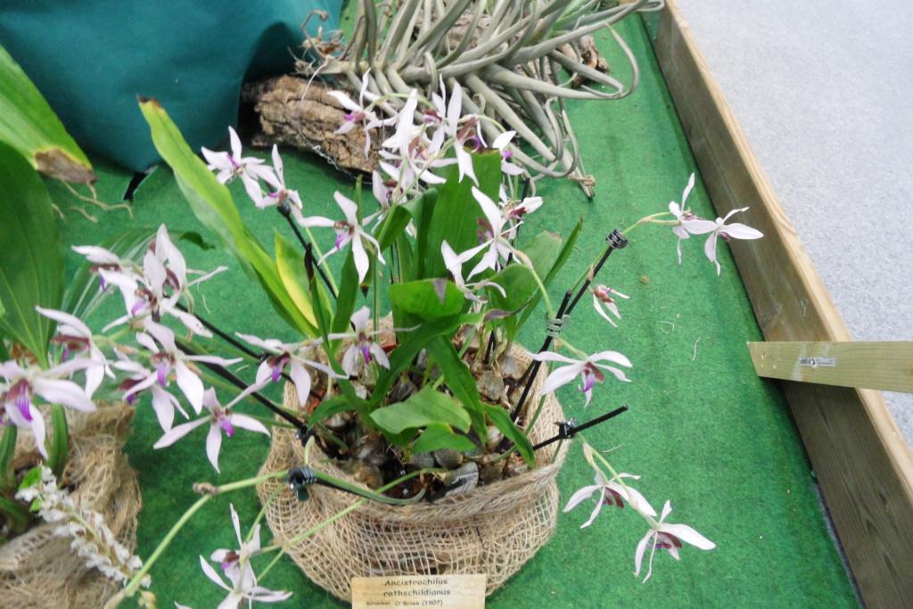 Salon orchidées Bouc-Bel-Air - Page 2 02710