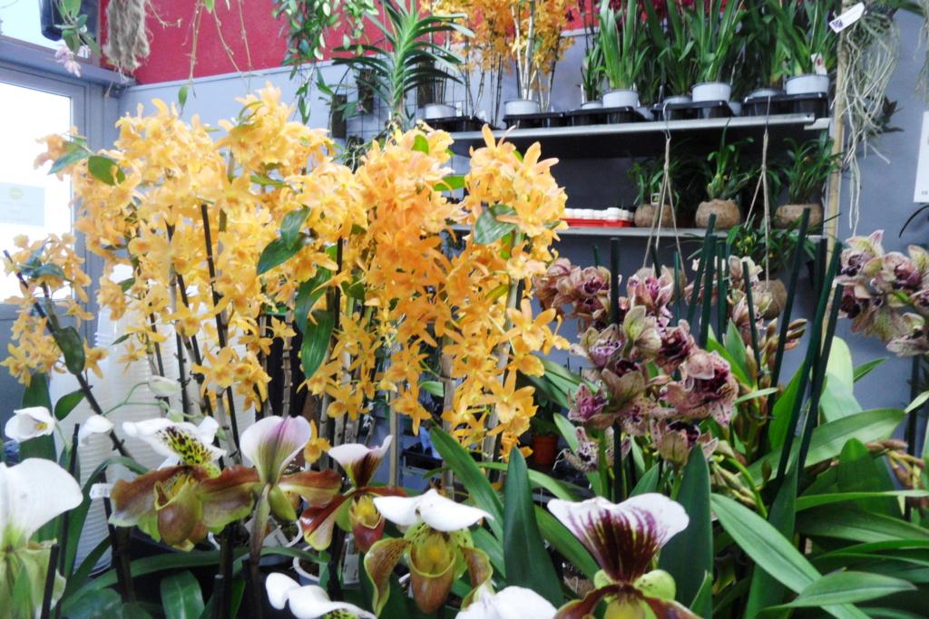 Salon orchidées Bouc-Bel-Air - Page 2 02810