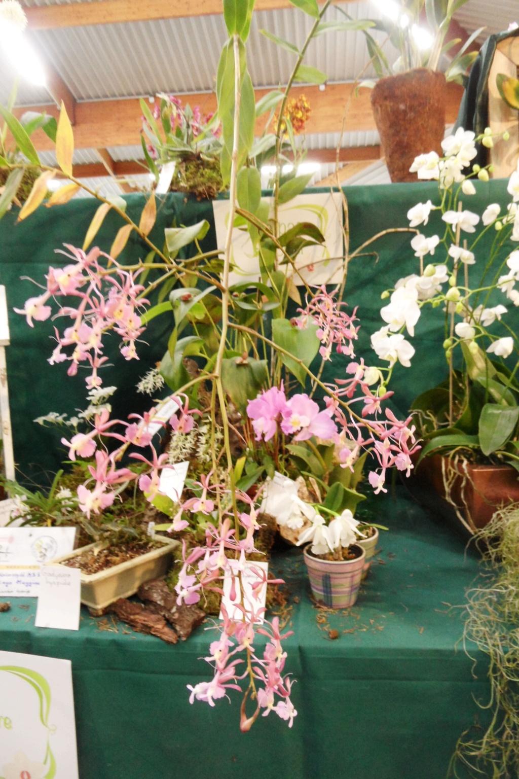 Salon orchidées Bouc-Bel-Air - Page 2 02910