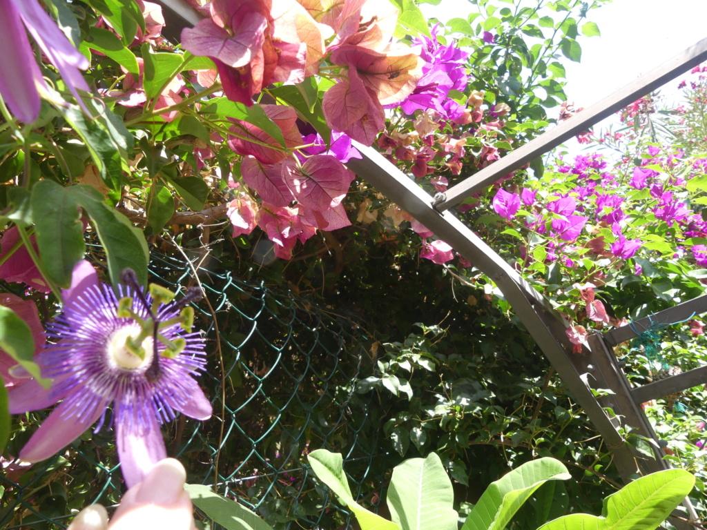 Mon petit jardin de ville - Page 22 03125
