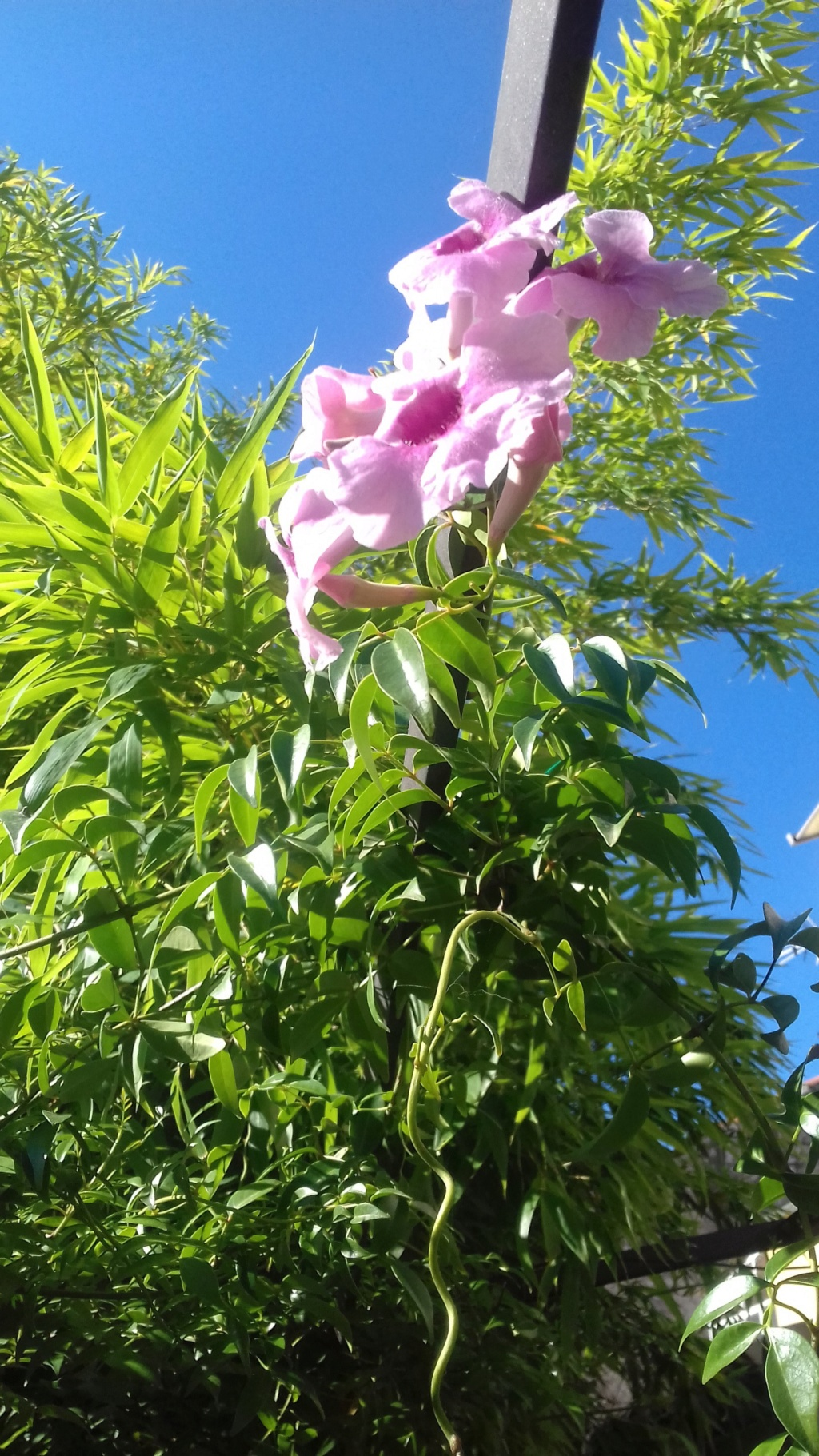 Mon petit jardin de ville - Page 6 03718