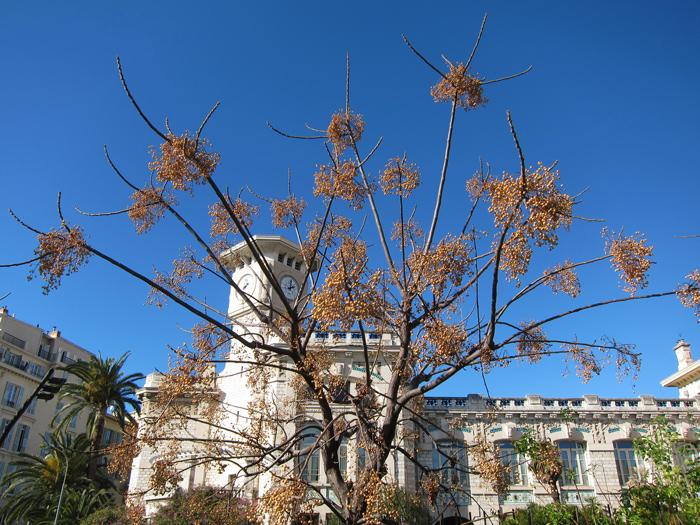 Quel est donc cet arbre ? Img_3010