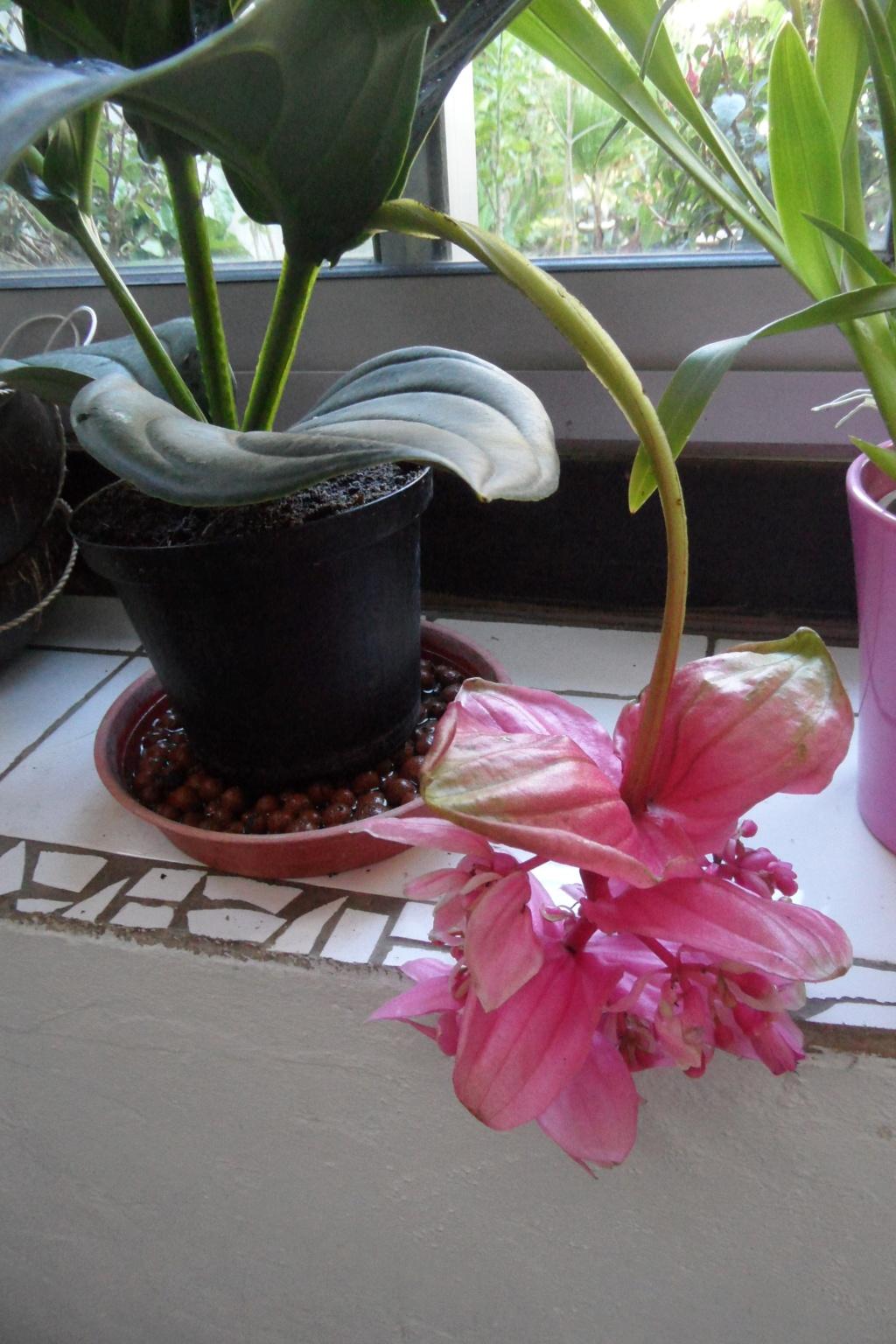 Mes plantes dans la véranda - Page 2 Sam_0546