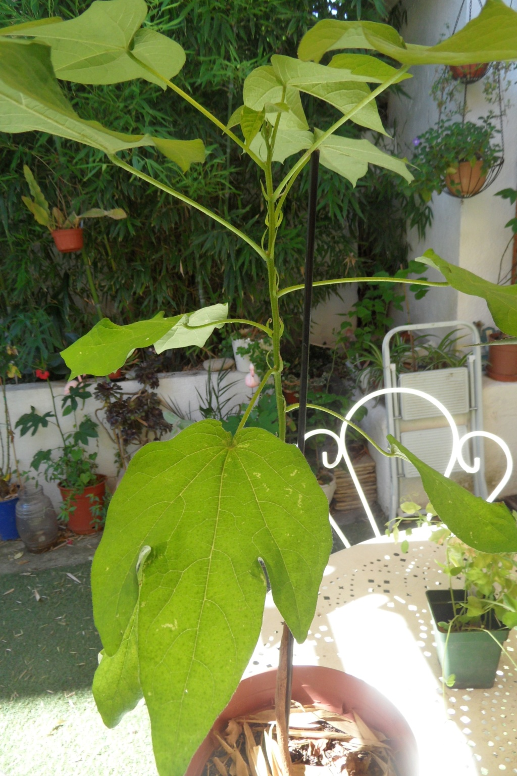 plante peu courante a decouvrir - Page 2 Sam_0557