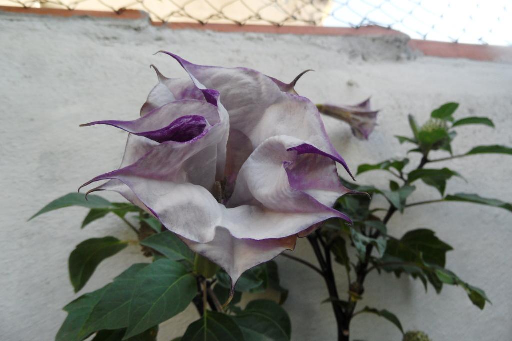 Que pensez-vous de cette plante Sam_0640
