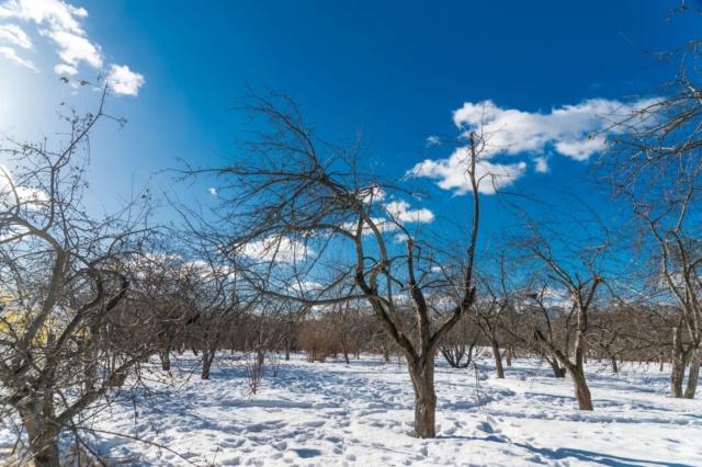 """Природа у ЖК """"Летний сад"""" - Страница 4 Fzewui10"""