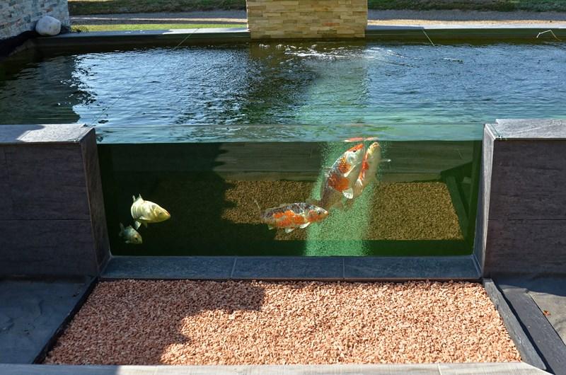 Vivier (bassin) de 15 m3 pour Koï,  en blocs à banchés, mode gravitaire, semi hors de 600 - Page 2 Dsc_3615