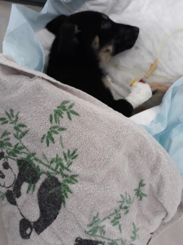 ORPHEE - femelle croisée de petite taille adulte, née juillet 2018. Attrapée avec ses 7 frères et soeurs (PASCANI) - REMEMBER ME LAND - DECEDEE 46508010