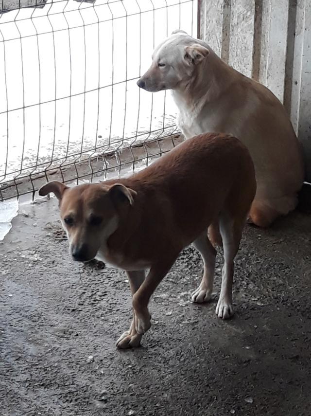 MAIKA - chienne croisée de taille moyenne, née 2015 - (Pascani) REMEMBER ME LAND - Page 2 47681410