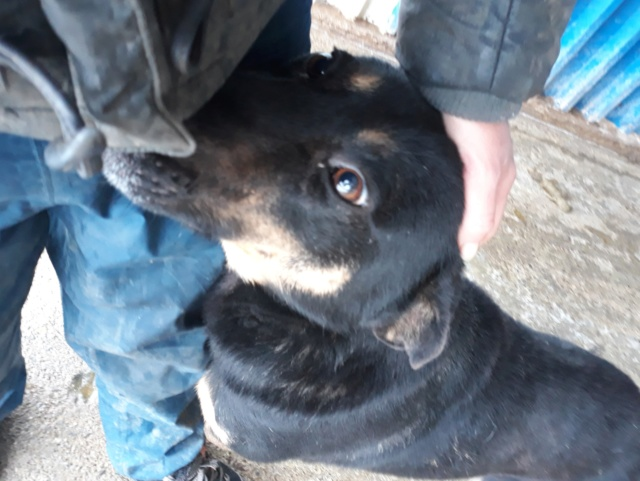 ZIGZAG, chien battu et martyrisé - mâle croisé Berger Allemand, taille moyenne, né environ 2008 - (PASCANI) REMEMBER ME LAND - Adopté par Laury-Anne (35) - Page 3 48045710
