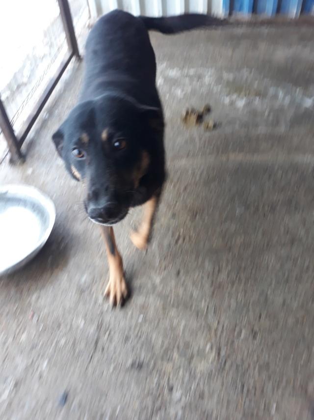 ZIGZAG, chien battu et martyrisé - mâle croisé Berger Allemand, taille moyenne, né environ 2008 - (PASCANI) REMEMBER ME LAND - Adopté par Laury-Anne (35) - Page 3 48246010