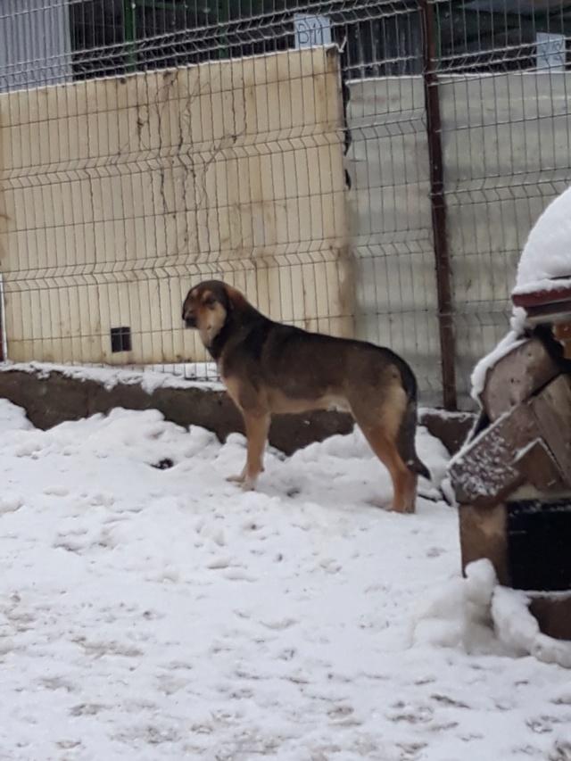 SIRTAKI - mâle croisé de grande taille, né en 2015 (PASCANI) - REMEMBER ME LAND 48376911