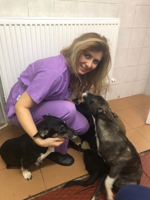 LISETTE - femelle, handicapée, croisée de petite taille à moyenne, née environ en 2017 (PASCANI) - clinique de Mircea (Bucarest)  - Page 4 48380412