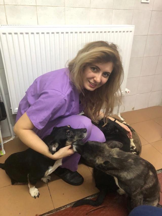 LISETTE - femelle, handicapée, croisée de petite taille à moyenne, née environ en 2017 (PASCANI) - clinique de Mircea (Bucarest)  - Page 4 48414410
