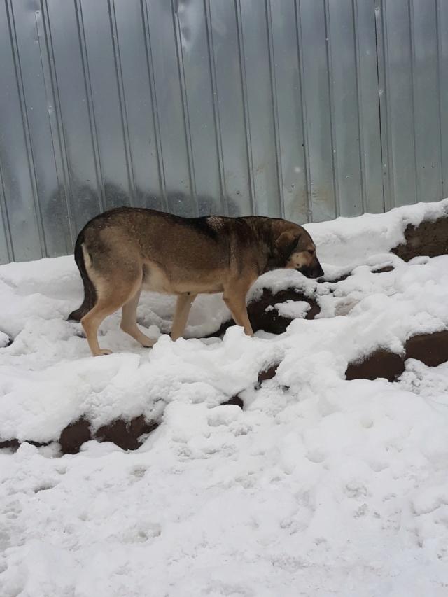 AURA - femelle de taille moyenne, née en 2012 (PASCANI) - REMEMBER ME LAND 48420410