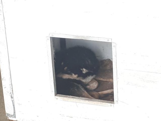 ALEXANDRIE - femelle croisée, de taille moyenne, née environ en 2016 (PASCANI) - REMEMBER ME LAND 51359013