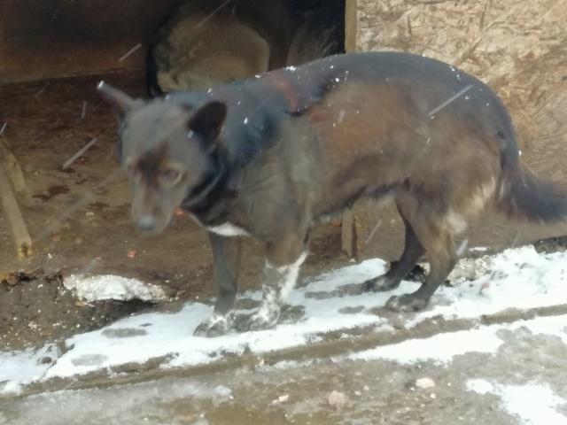 ROMY - femelle croisée de petite taille, née en 2011 (PASCANI) - REMEMBER ME LAND 51724410