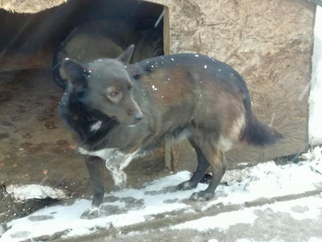 ROMY - femelle croisée de petite taille, née en 2011 (PASCANI) - REMEMBER ME LAND 51791210
