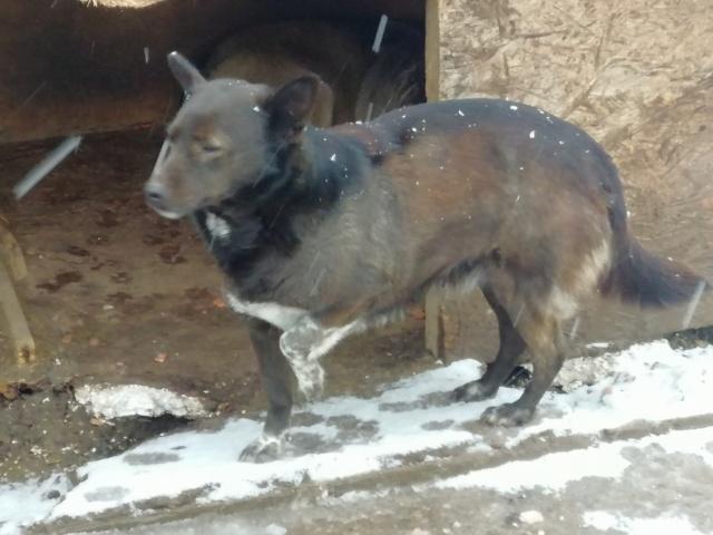ROMY - femelle croisée de petite taille, née en 2011 (PASCANI) - REMEMBER ME LAND 52607810