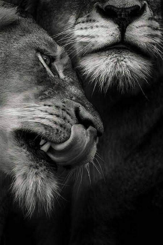 Mundo Animal y Espacios Naturales Ffe94b10