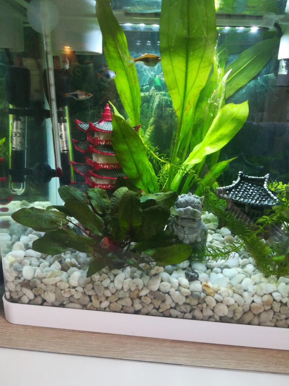 Présentation aquarium 20 l  15574110
