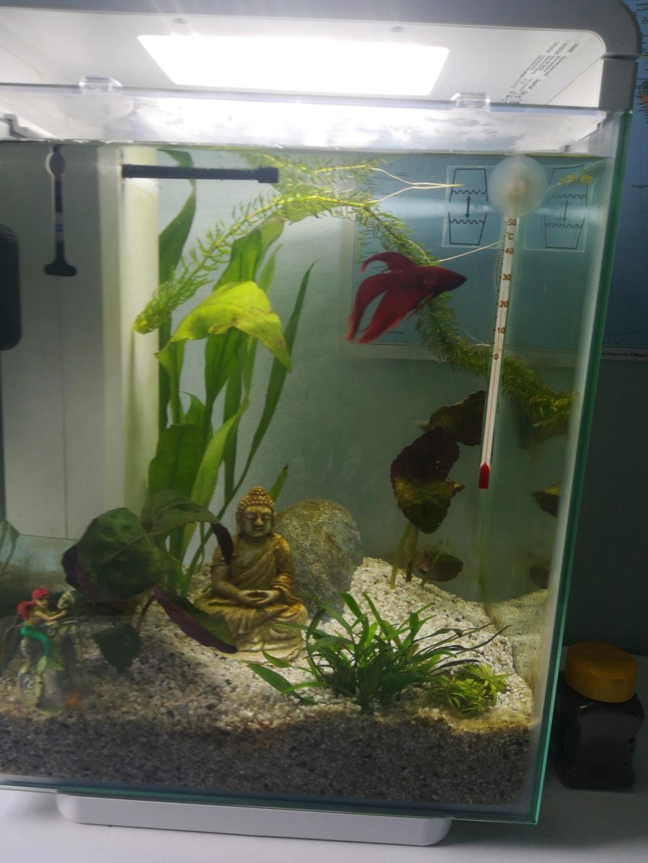 Présentation aquarium 20 l  15574111