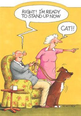 Motiverende Katt10