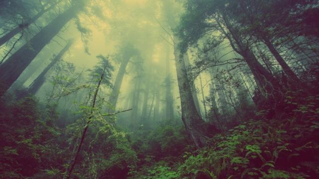 El aire sabe a veneno (Höor) Forest10