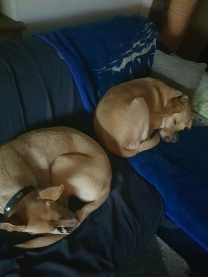 buster - Bildertagebuch - BUSTER, ein Traumhund wurde streunend aufgefunden - VERMITTELT - 0e987111