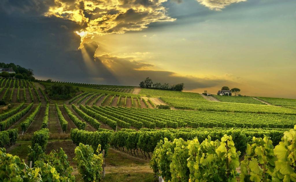 République Fédérale du Newland Vignes10