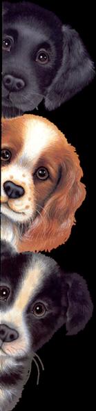 Диагностика Животных (негатив, ставы, защиты, состояние)  13809710
