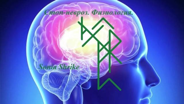 Комплекс «Стоп-невроз» 14481113