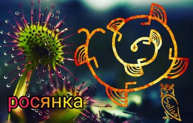 Росянка.Автор Solisa 45810
