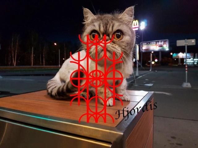 """Гальдрастав""""Котейка"""" Ooo1310"""