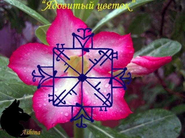 "Рассорка ""Ядовитый цветок"" Qy_mwg10"