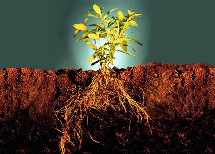 Стимуляторы корнеобразования растений Znbxdr10