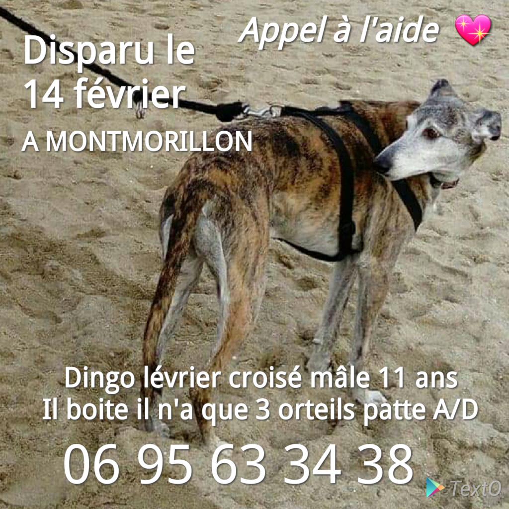 Dingo lévrier Montmorillon 86. INDRE. HAUTEVIENNE  Image_11