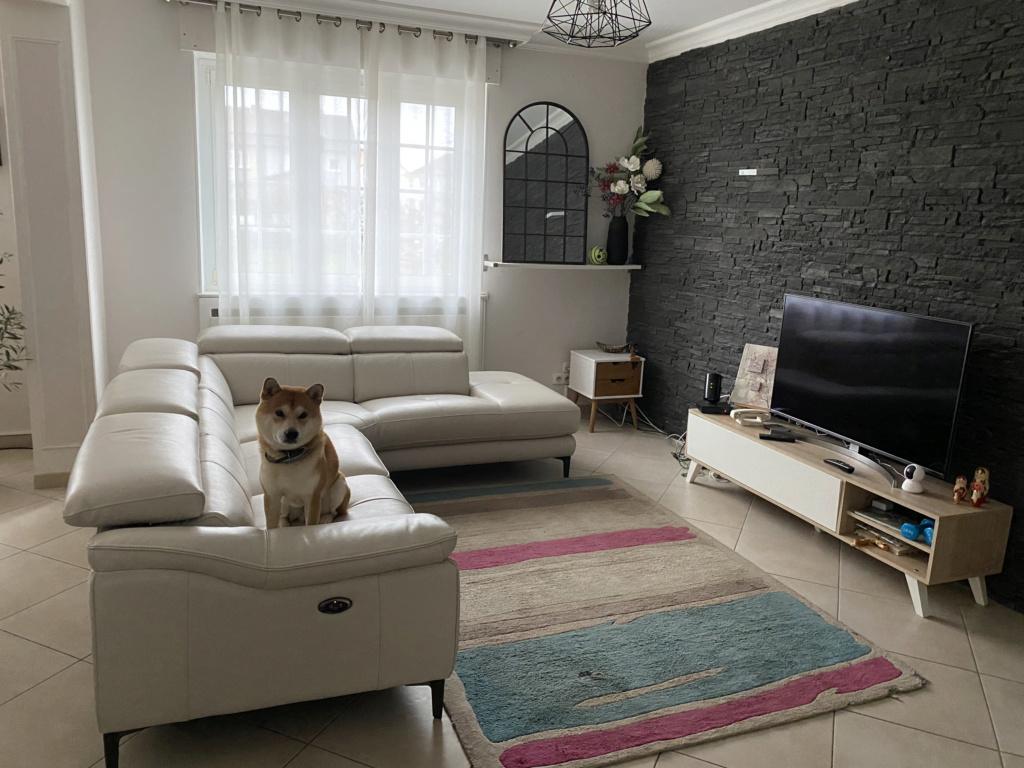 Conseils pour un nouveau tapis F8eb4210