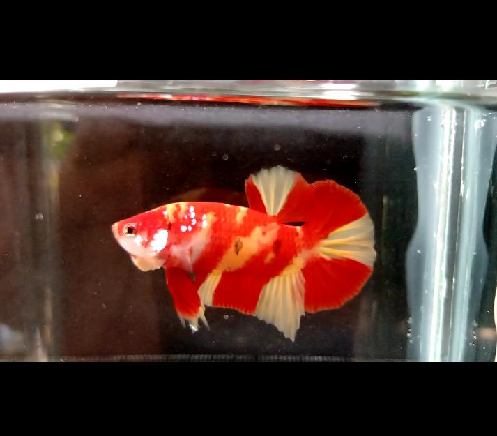 Puesta hmpk Nemo  Inboun13