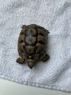 Identification de ma tortue 21053410