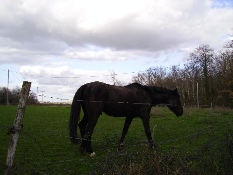 Besoin d'aide pour aider un cheval et sa cavalière 2910