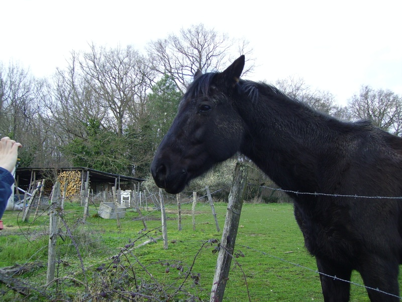 Besoin d'aide pour aider un cheval et sa cavalière 3010
