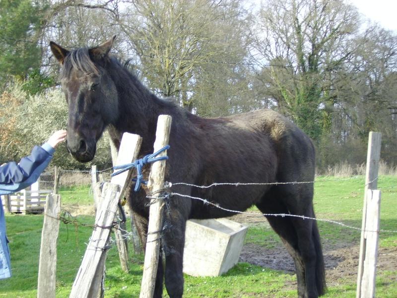Besoin d'aide pour aider un cheval et sa cavalière 3210