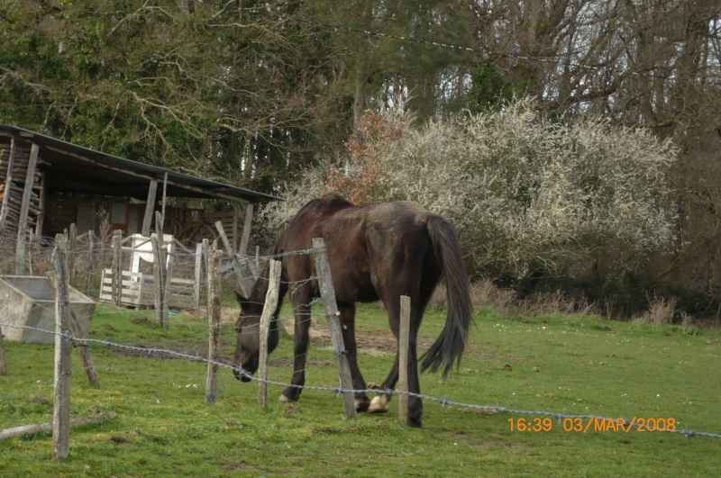 Besoin d'aide pour aider un cheval et sa cavalière P1000413