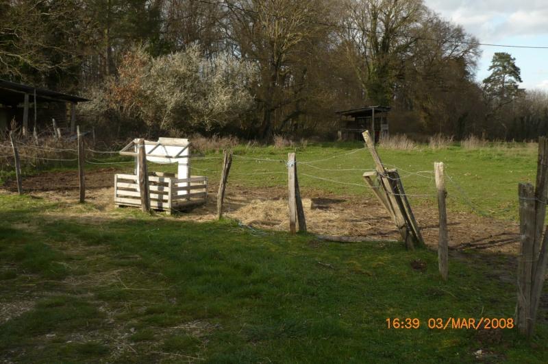 Besoin d'aide pour aider un cheval et sa cavalière P1000415