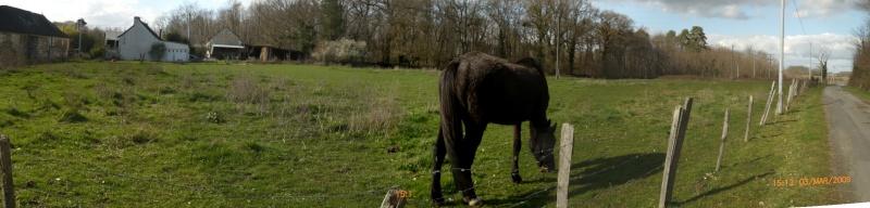 Besoin d'aide pour aider un cheval et sa cavalière Stitch10