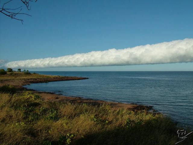 Le nuage de gloire du matin  Carpen12