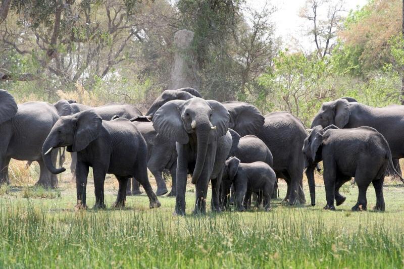 Recit de voyage en Namibie Namibi18